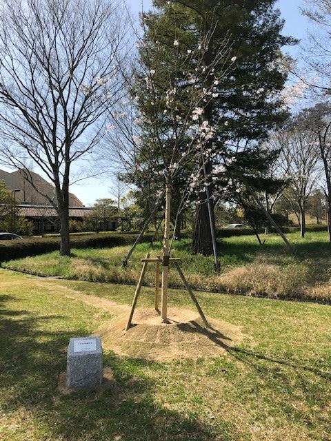 記念植樹1